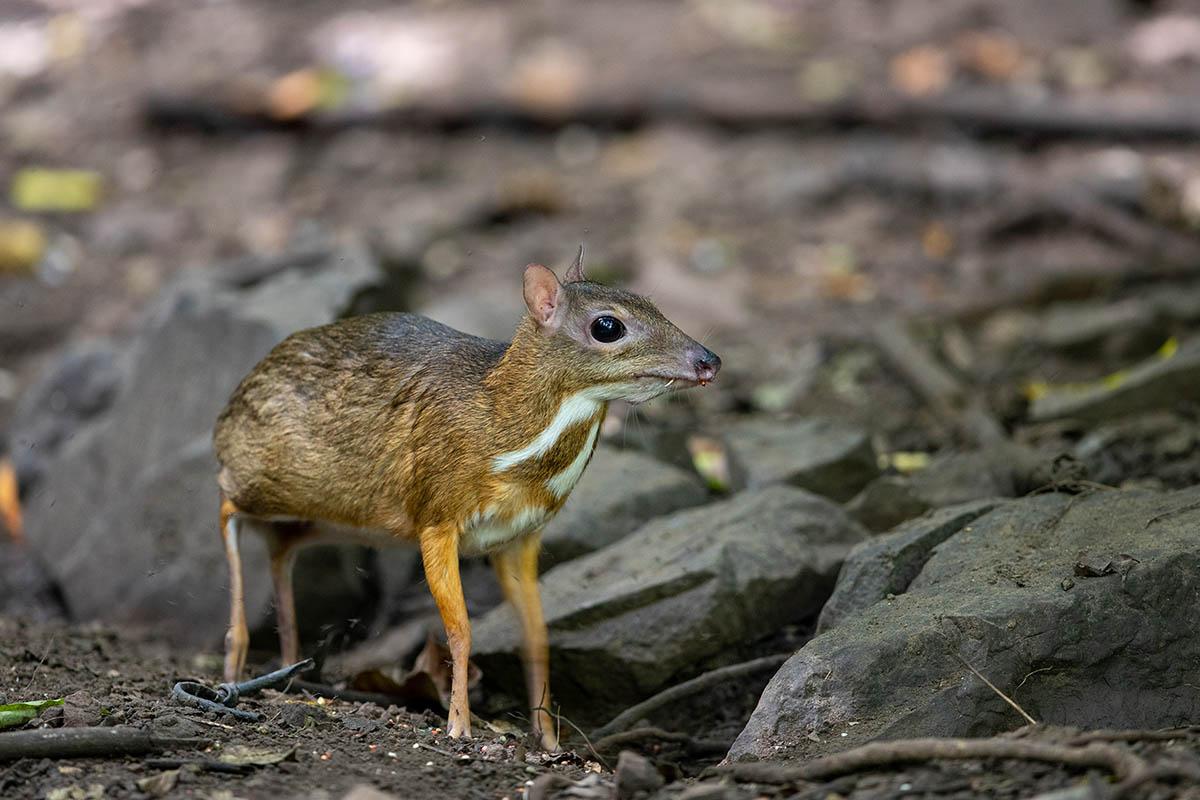 Các công ước về bảo tồn đa dạng sinh học trên thế giới