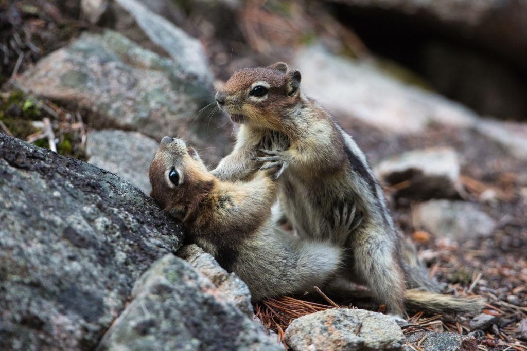 Những khoảnh khắc đẹp khi động vật hoang dã giao chiến với nhau