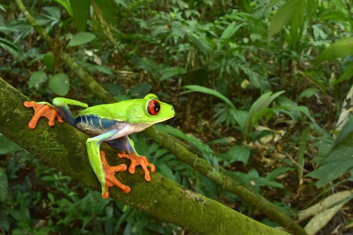 Vài nét về vai trò hệ sinh thái rừng