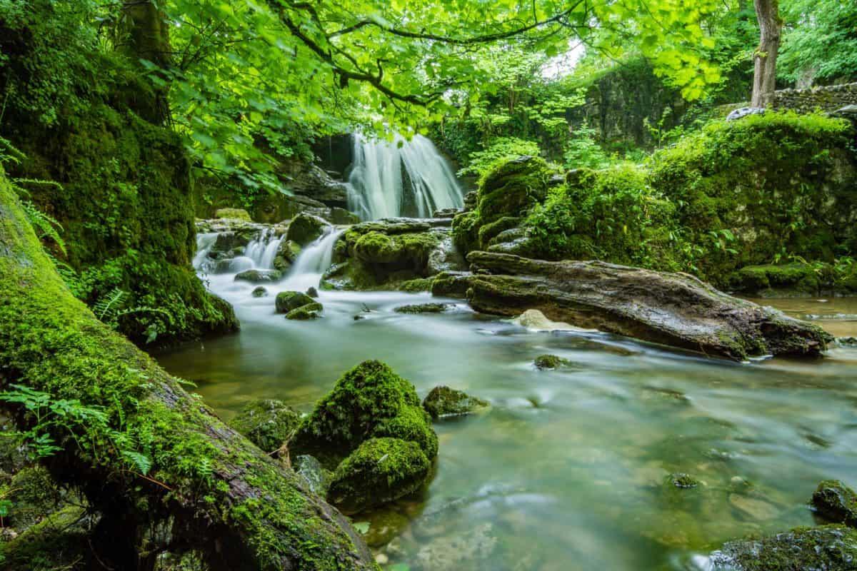 Quan niệm của Phật giáo về môi sinh và đạo đức môi sinh