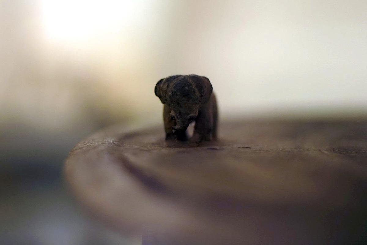 Chùm ảnh: Ẩn số về hình tượng voi trên trống đồng Hồi Xuân