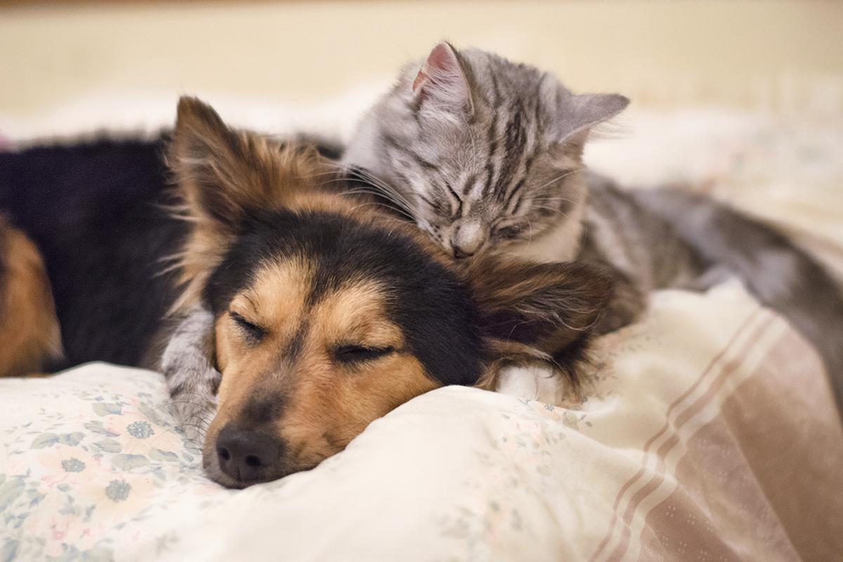 Phúc lợi động vật – biểu hiện của một xã hội văn minh