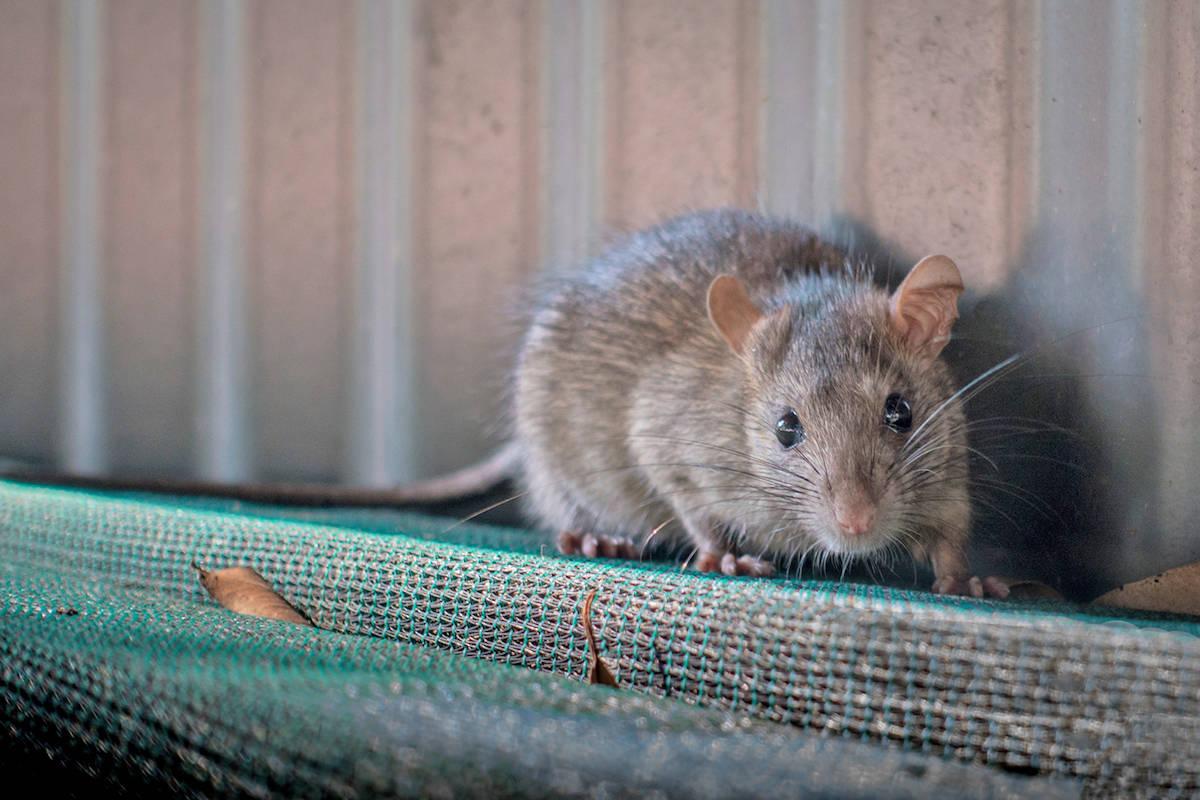 'Chuột chạy cùng sào…': Một 'lời nguyền' vẫn ám ảnh ngành sư phạm