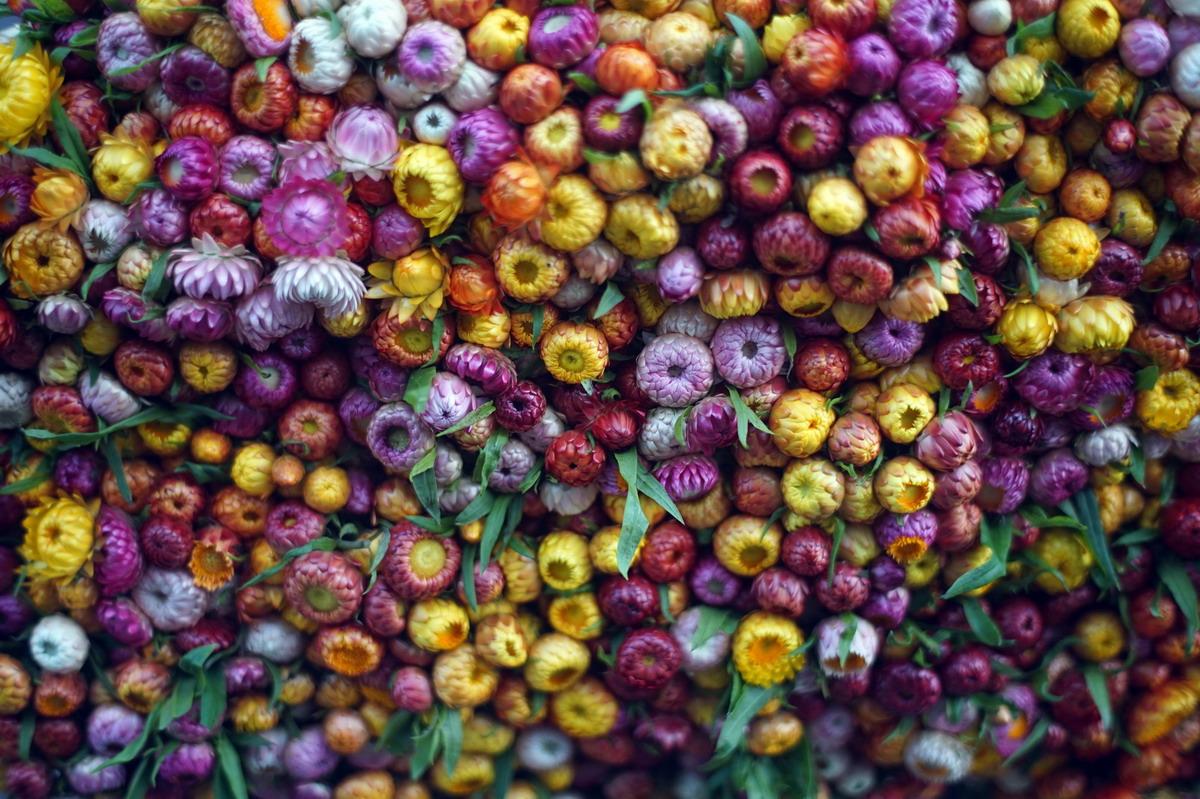 Chùm ảnh: 'Hoa mắt' với những sắc màu chỉ có ở chợ Đà Lạt