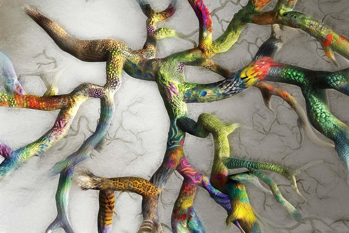 Kiến thức đa dạng sinh học: Thế giới sinh vật được phân chia như thế nào?