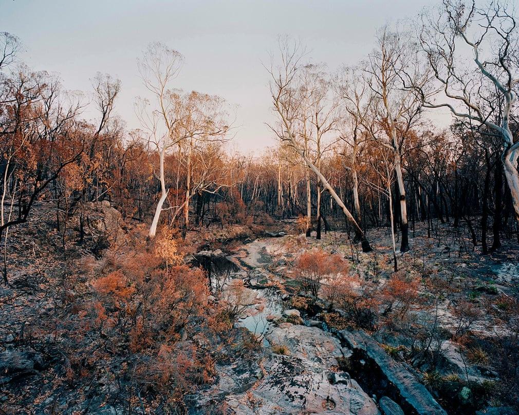Chùm ảnh: Hiện trạng rừng Australia sau những đám cháy hủy diệt