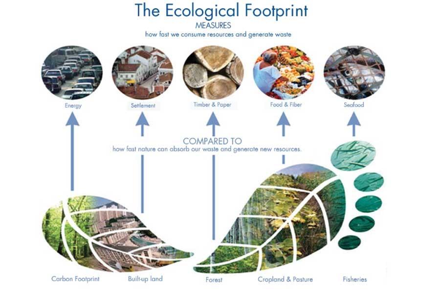 Những điều cần biết về khái niệm Dấu chân sinh thái
