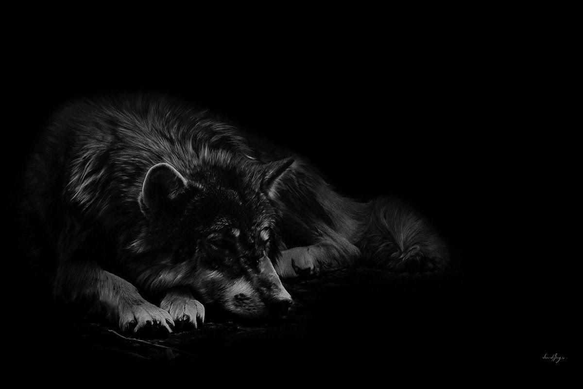 Nhận diện căn tính sói của 'giấc mộng Trung Hoa'