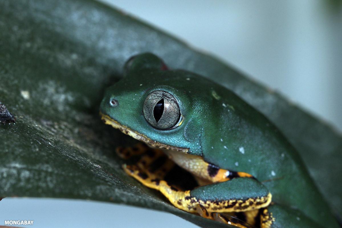 Bảo vệ đa dạng sinh học: Sự thất bại ctrên phạm vi toàn cầu