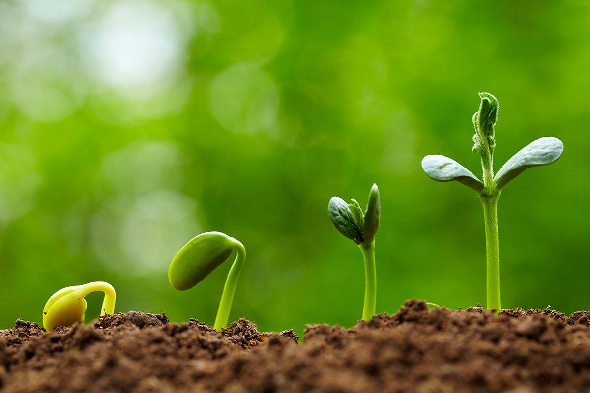 Bài học về phát triển bền vững từ câu chuyện 2.500 năm trước