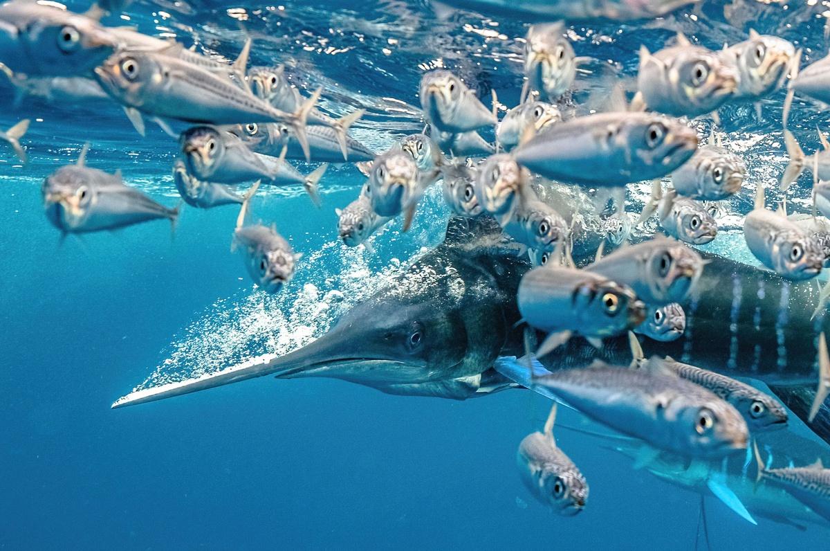 Loạt ảnh đoạt giải cuộc thi Nhiếp ảnh dưới nước năm 2021