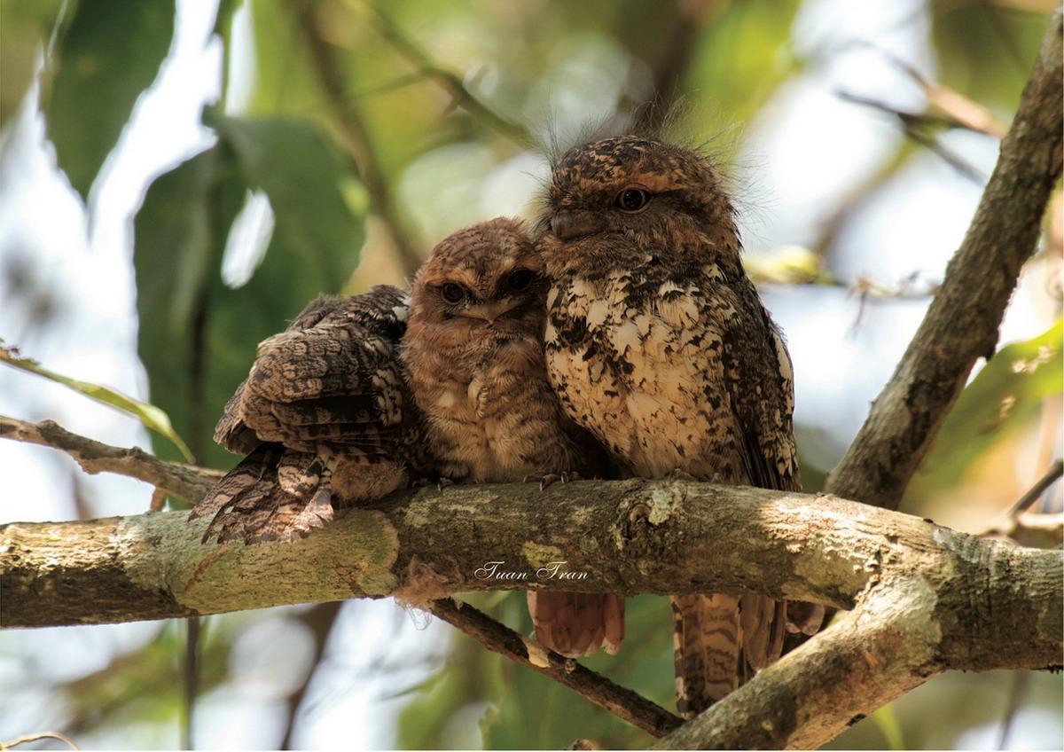 Chùm ảnh: Một số loài chim độc đáo trên khắp ba miền Việt Nam