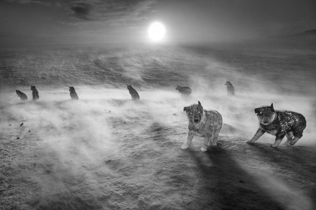 Chùm ảnh: Chó kéo xe – nét văn hóa dần biến mất ở đảo Greenland