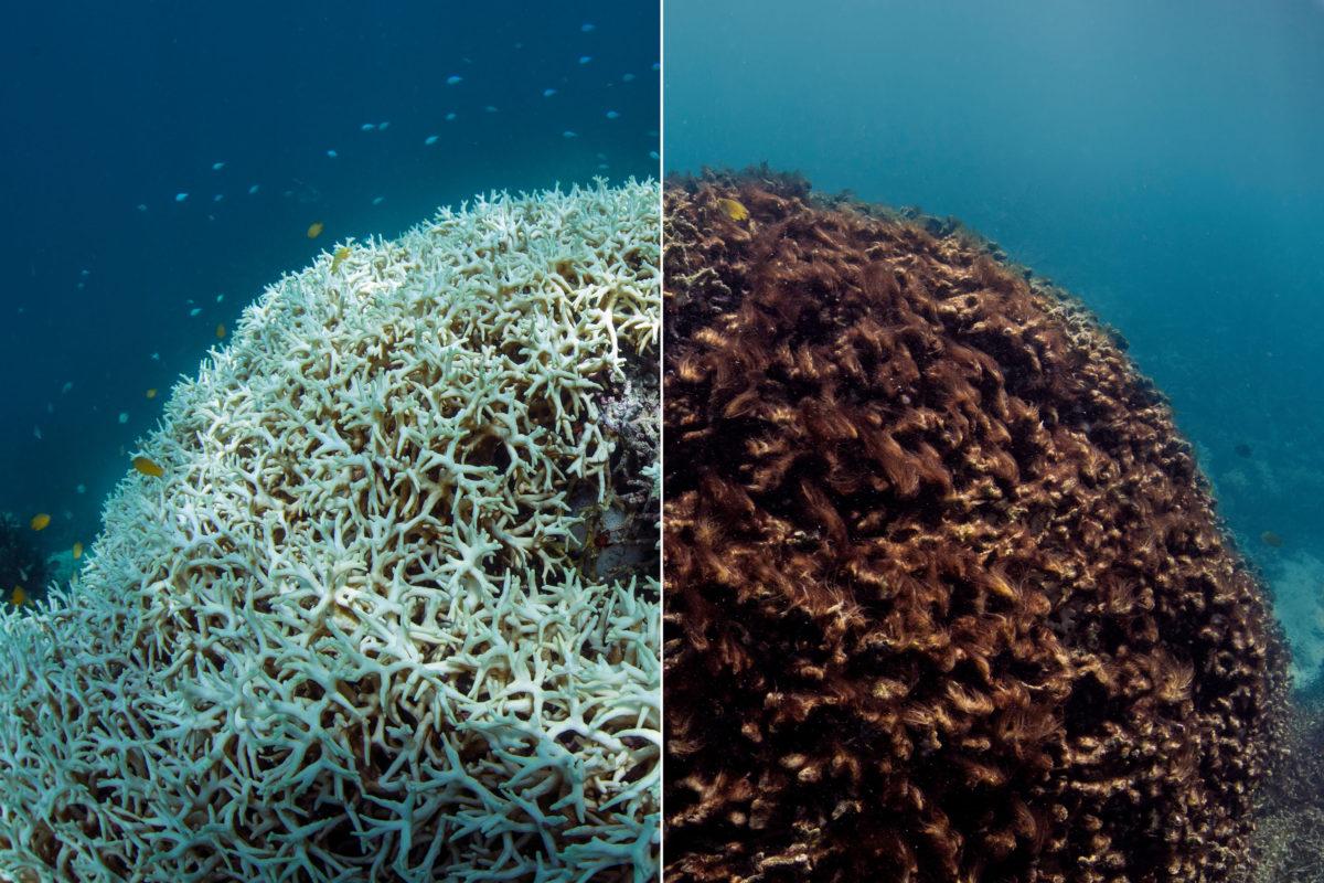Hệ sinh thái biển Việt Nam trước tác động của biến đổi khí hậu