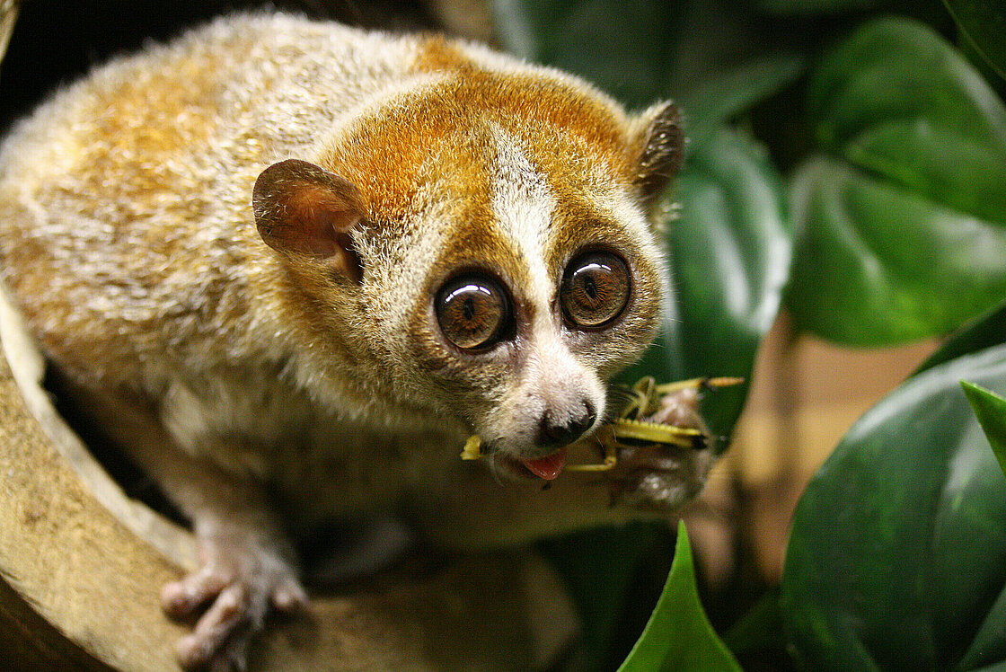 Chùm ảnh: 10 loài vật trông vô hại nhưng có thể gây chết người