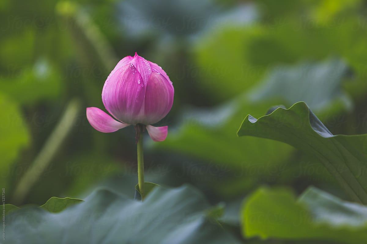 4 chìa khóa dẫn đến cuộc sống bình an trong tư tưởng Phật giáo