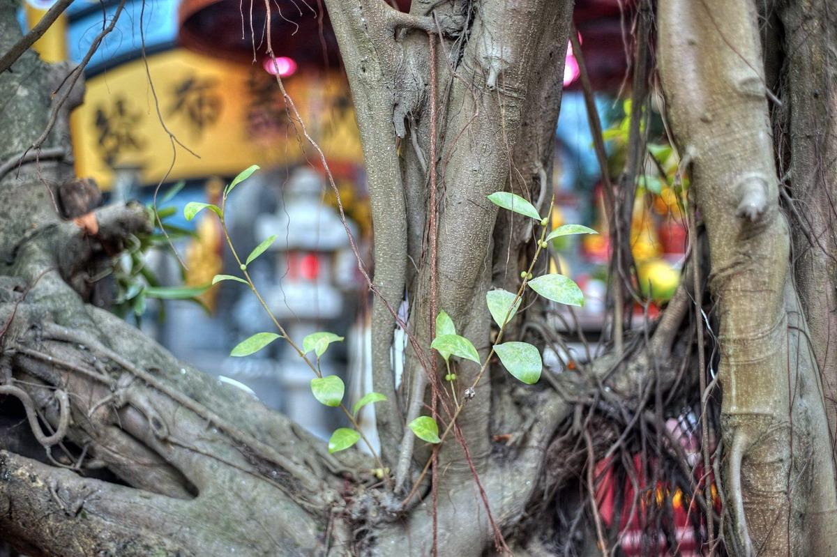 Chùm ảnh: Lăng mộ giữa phố phường Hà Nội của vua Phùng Hưng