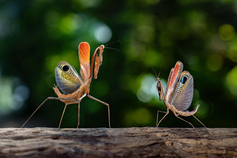 Chùm ảnh: Bên trong khu bảo tồn côn trùng ở Thái Lan