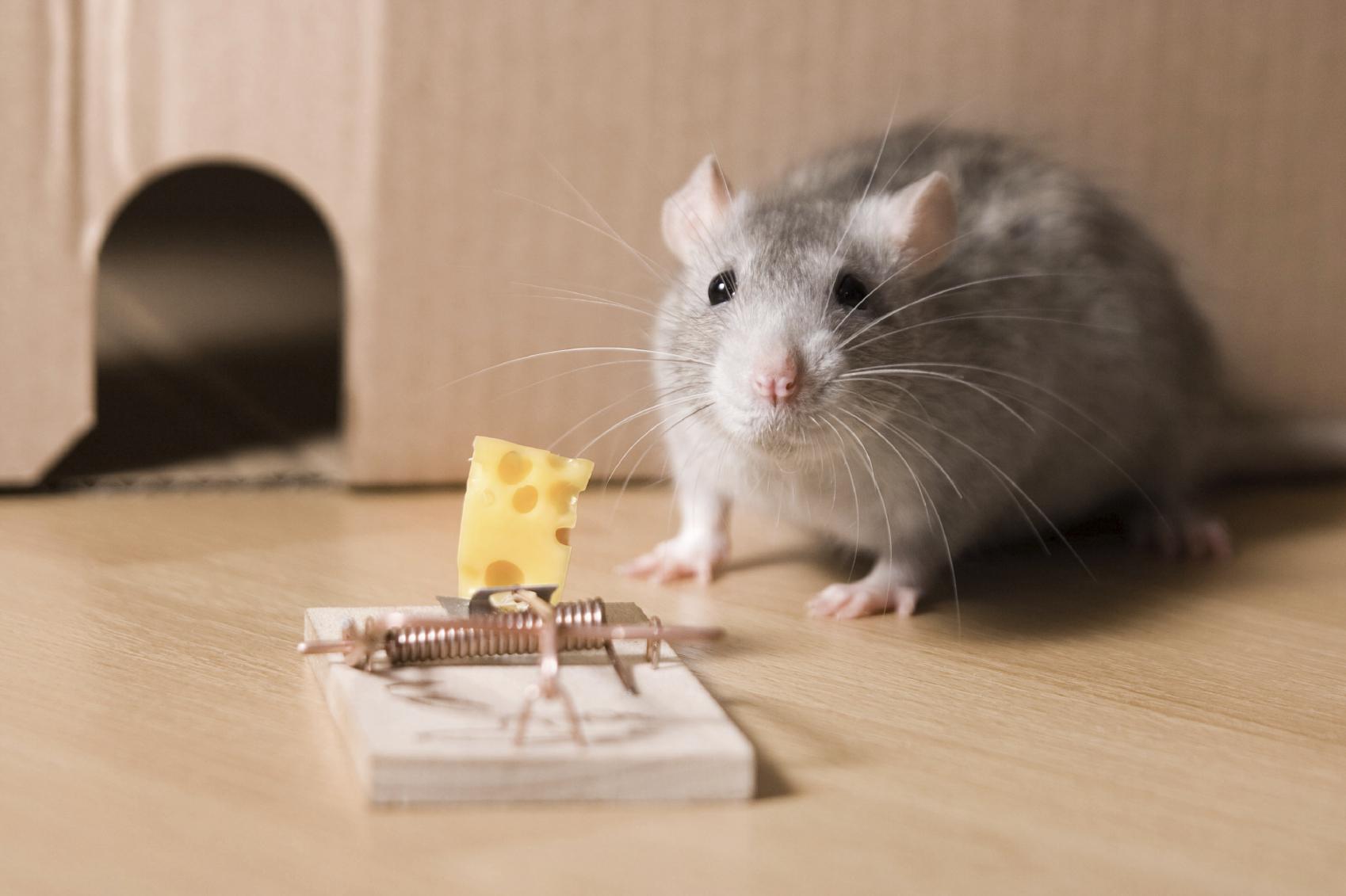 Chơi 'tiền ảo': Khi chuột lao vào bẫy vì miếng phô mai miễn phí