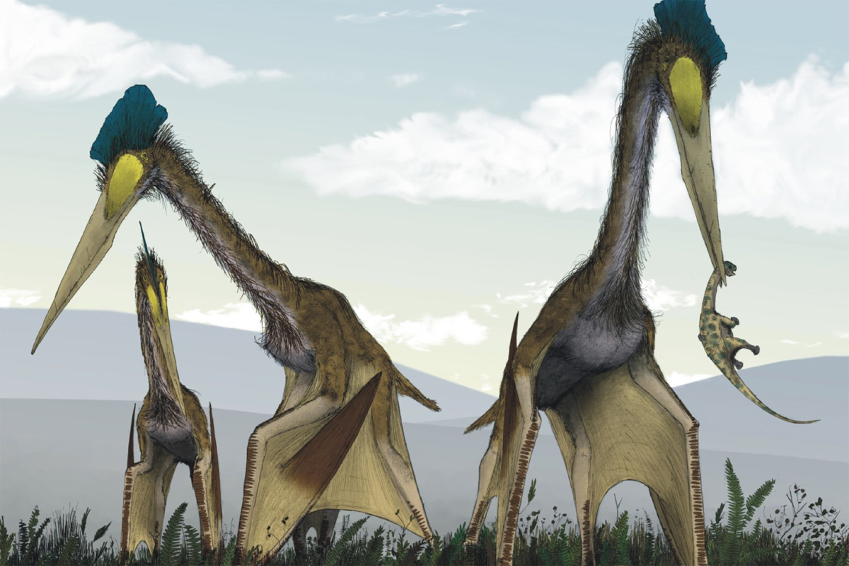 Chùm ảnh: Quetzalcoatlus – loài vật lớn nhất từng bay trên bầu trời
