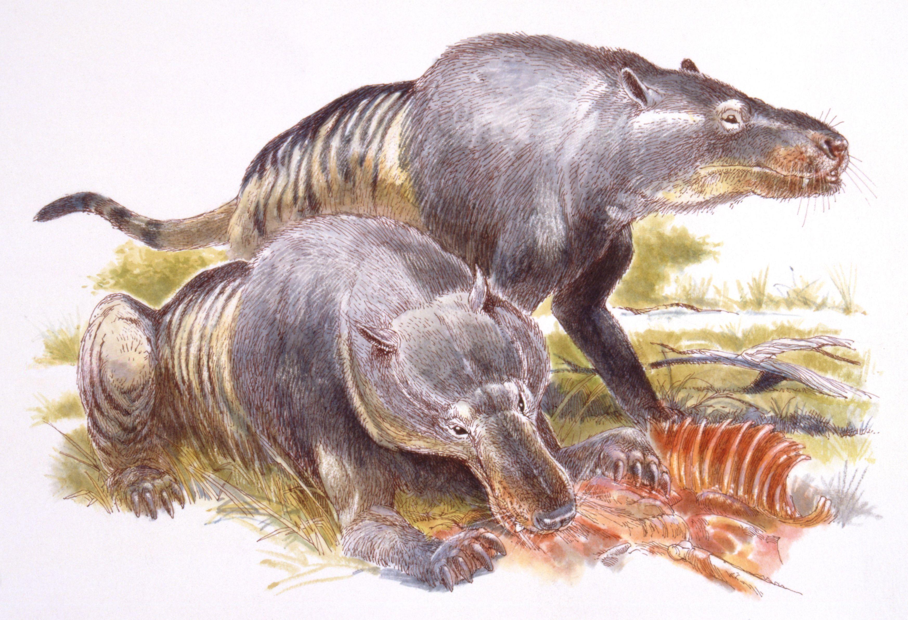 Chùm ảnh: Loài thú ăn thịt lớn nhất từng lang thang trên quả đất