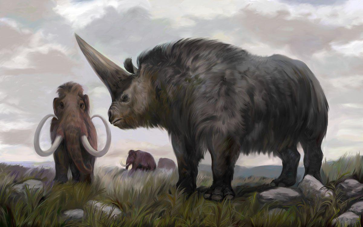Chùm ảnh: Elasmotherium – 'nguyên mẫu' của loài kỳ lân huyền thoại