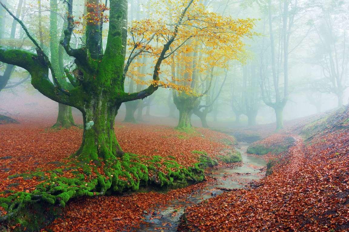 Chùm ảnh: Những khu rừng nhuốm màu cổ tích mê hoặc du khách