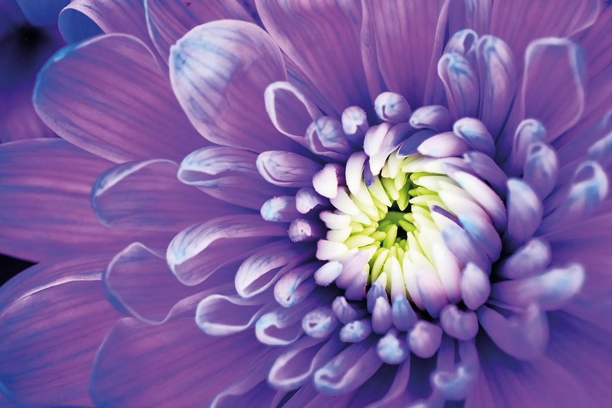 Kiến thức cơ bản cho những người thích chụp ảnh hoa hoét