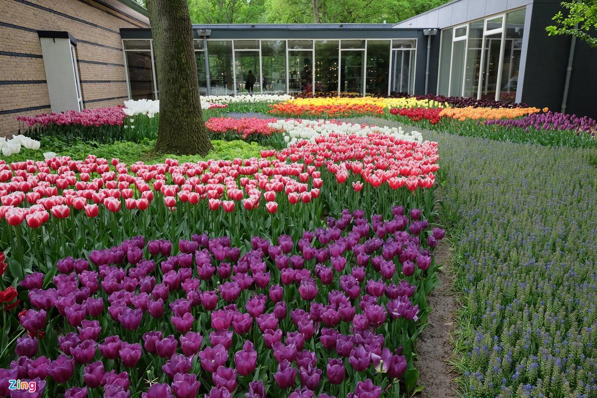 Chùm ảnh: Công viên Keukenhof – 'khu vườn của châu Âu'