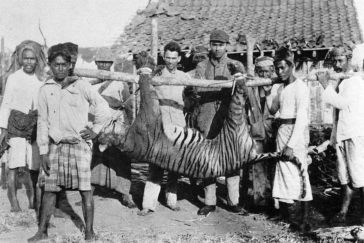 Chùm ảnh: Điểm danh 9 nòi hổ hiện đại, 3 nòi đã bị con người làm tuyệt chủng