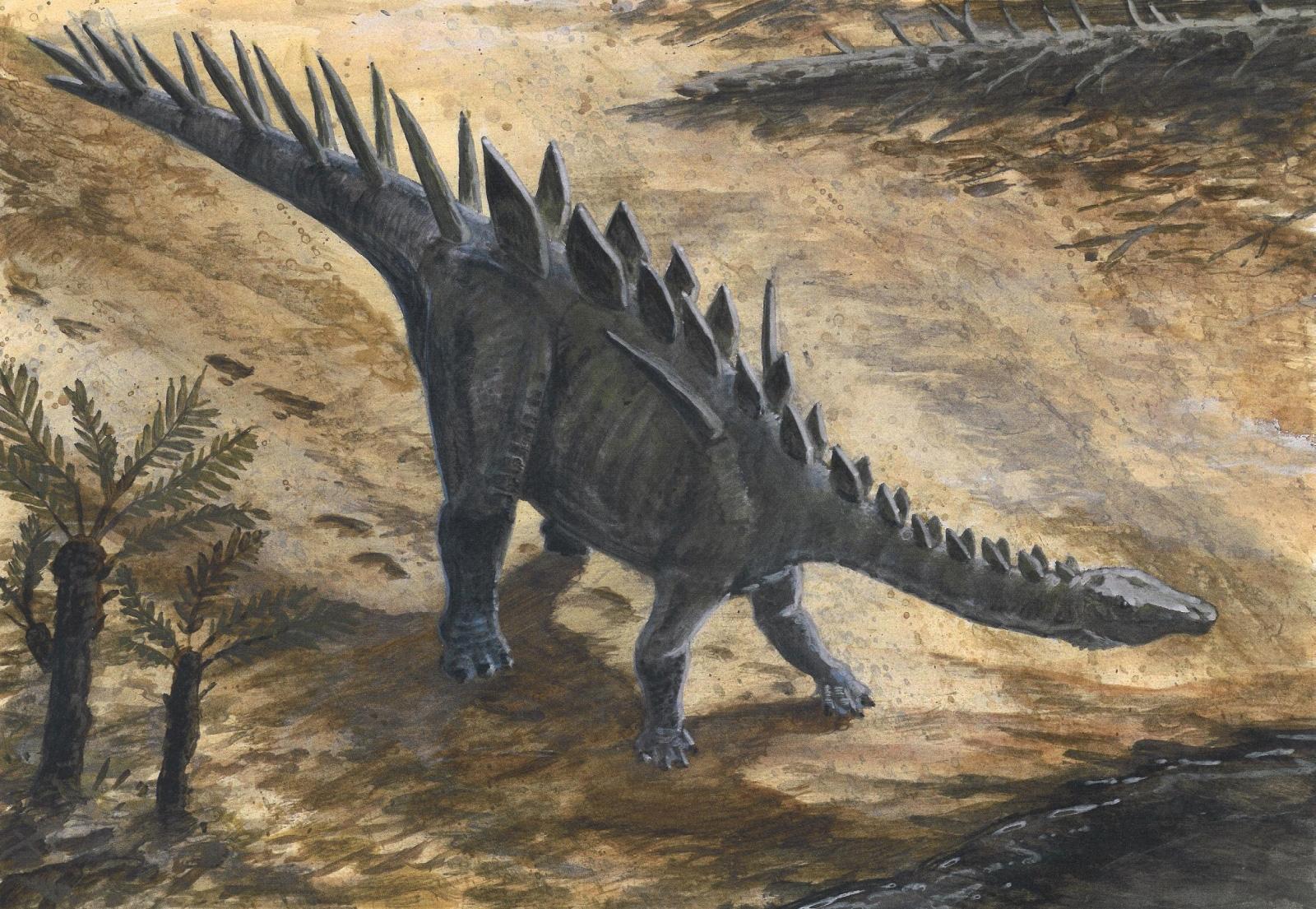 Chúng ảnh: Ngoại hình ấn tượng của các loài khủng long gai