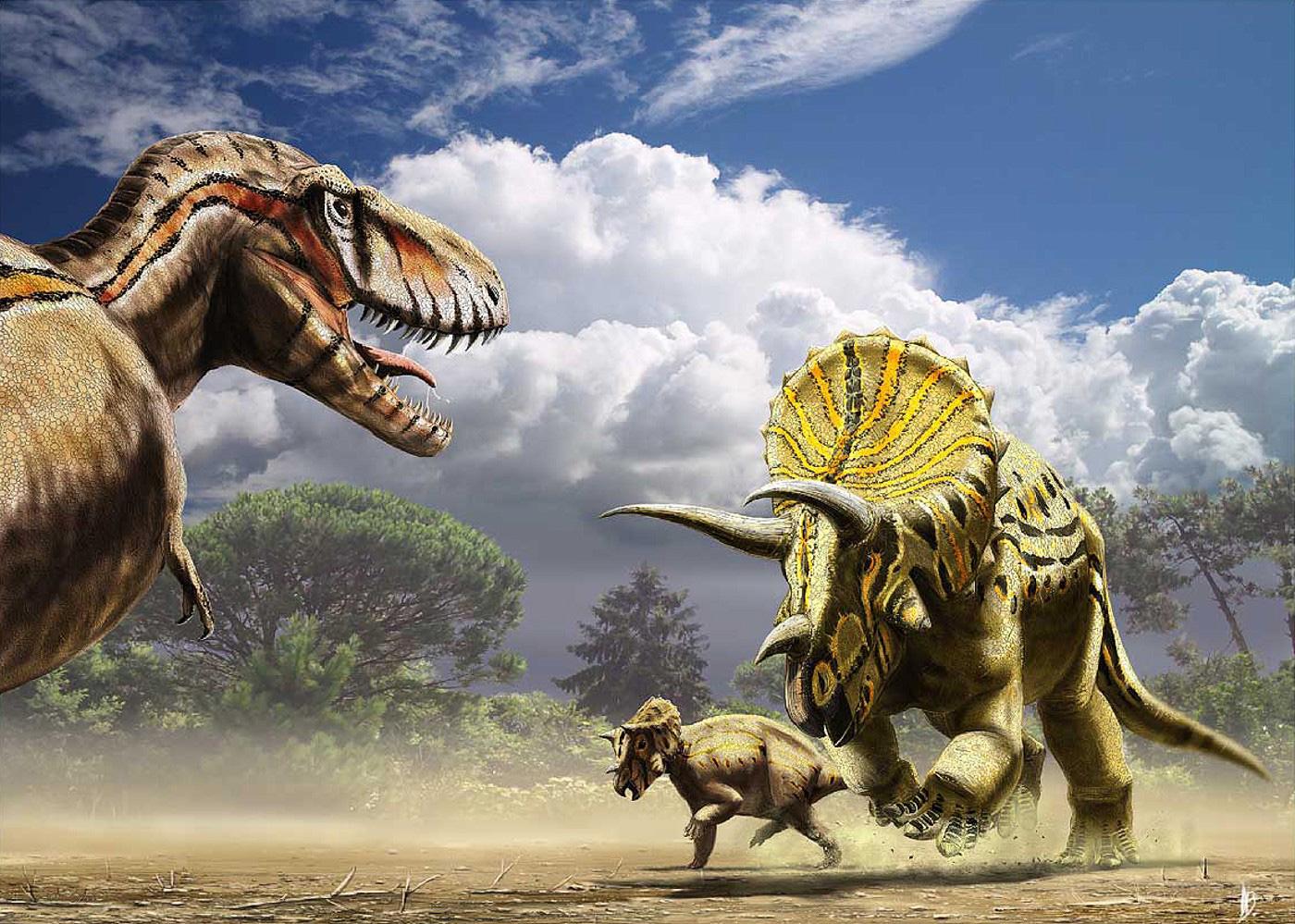 Chùm ảnh: Vũ khí phòng thủ đáng gờm của khủng long mặt sừng