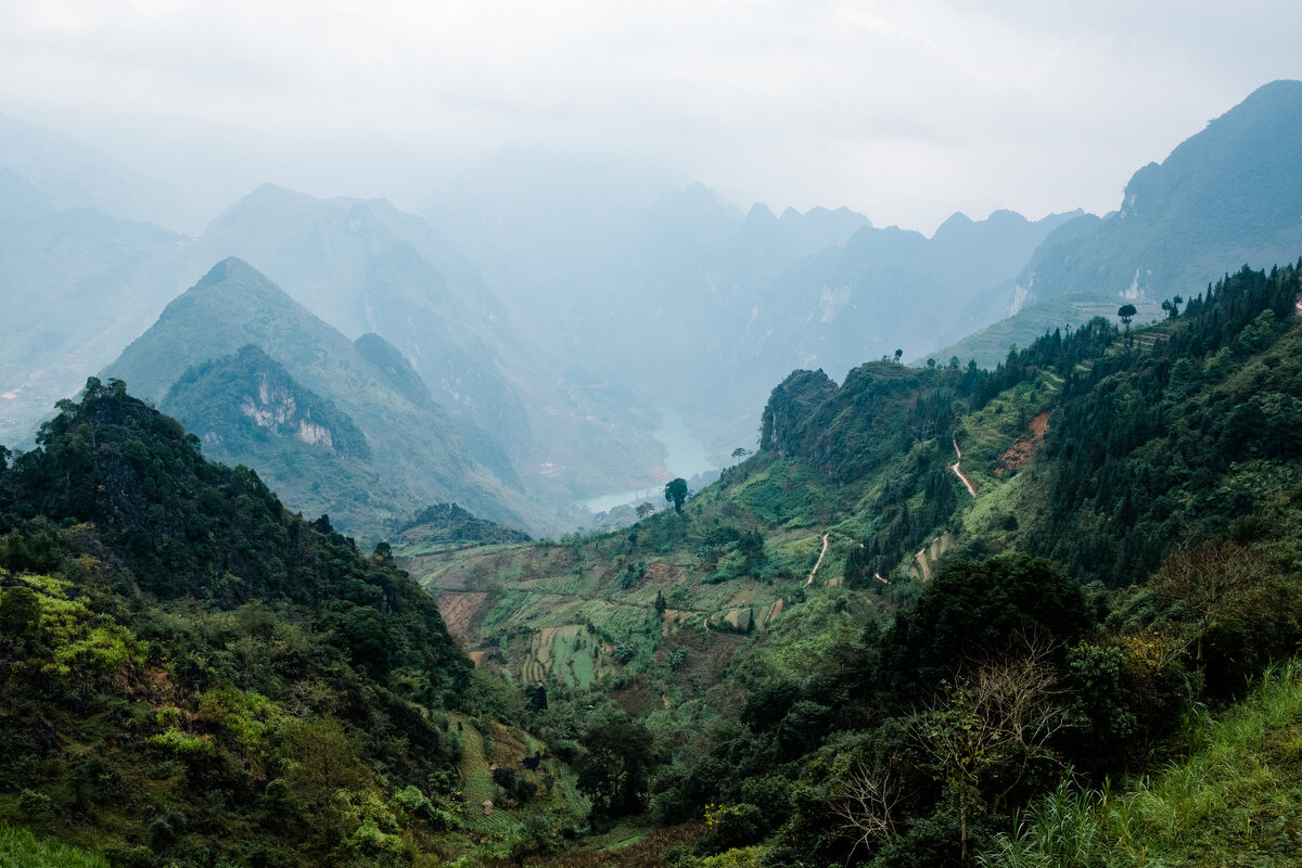 Tương lai nào cho những cánh rừng 'suy dinh dưỡng' của Việt Nam?