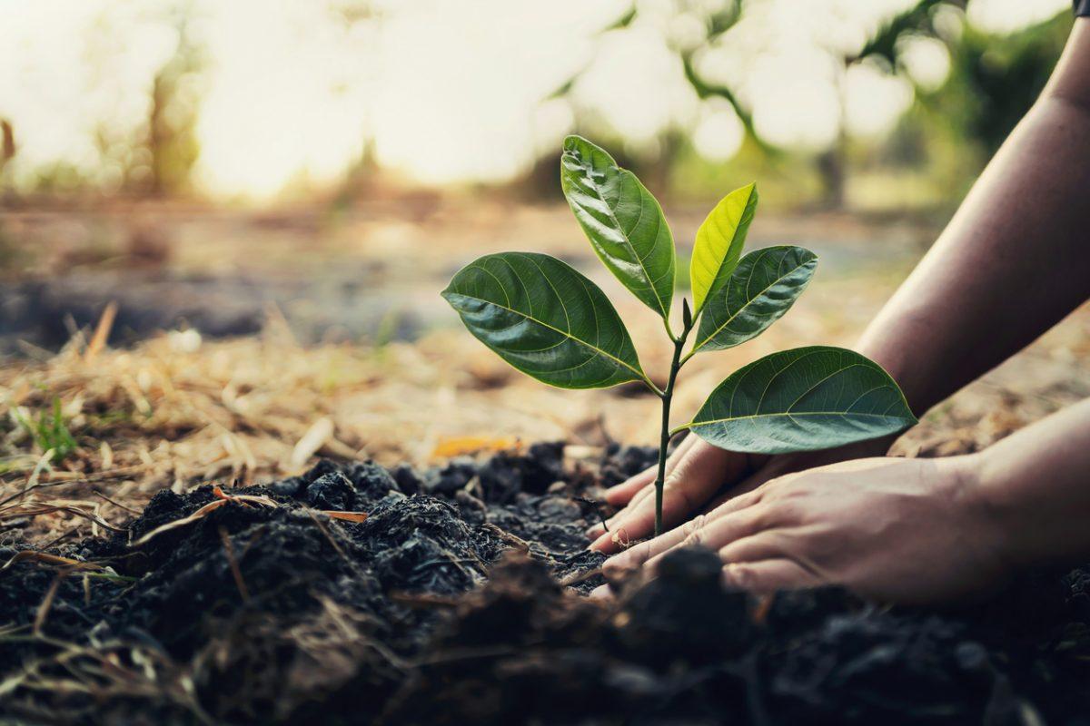 Quan điểm của Chủ tịch Hồ Chí Minh về bảo vệ môi trường sinh thái