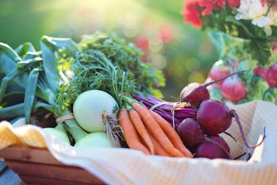 Dinh dưỡng thực vật và vai trò với sức khỏe con người